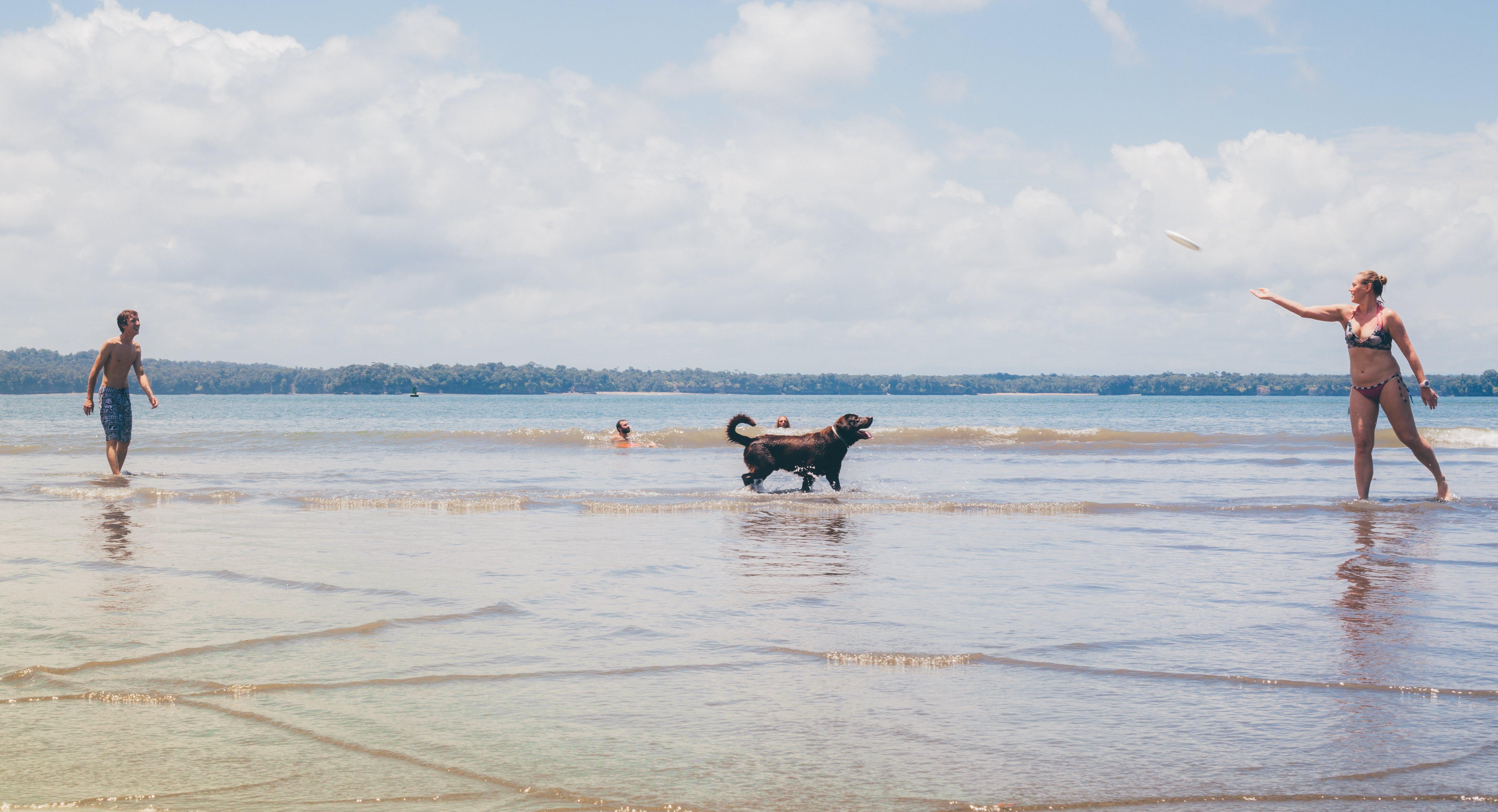 Short-coated Black Dog on Seashore