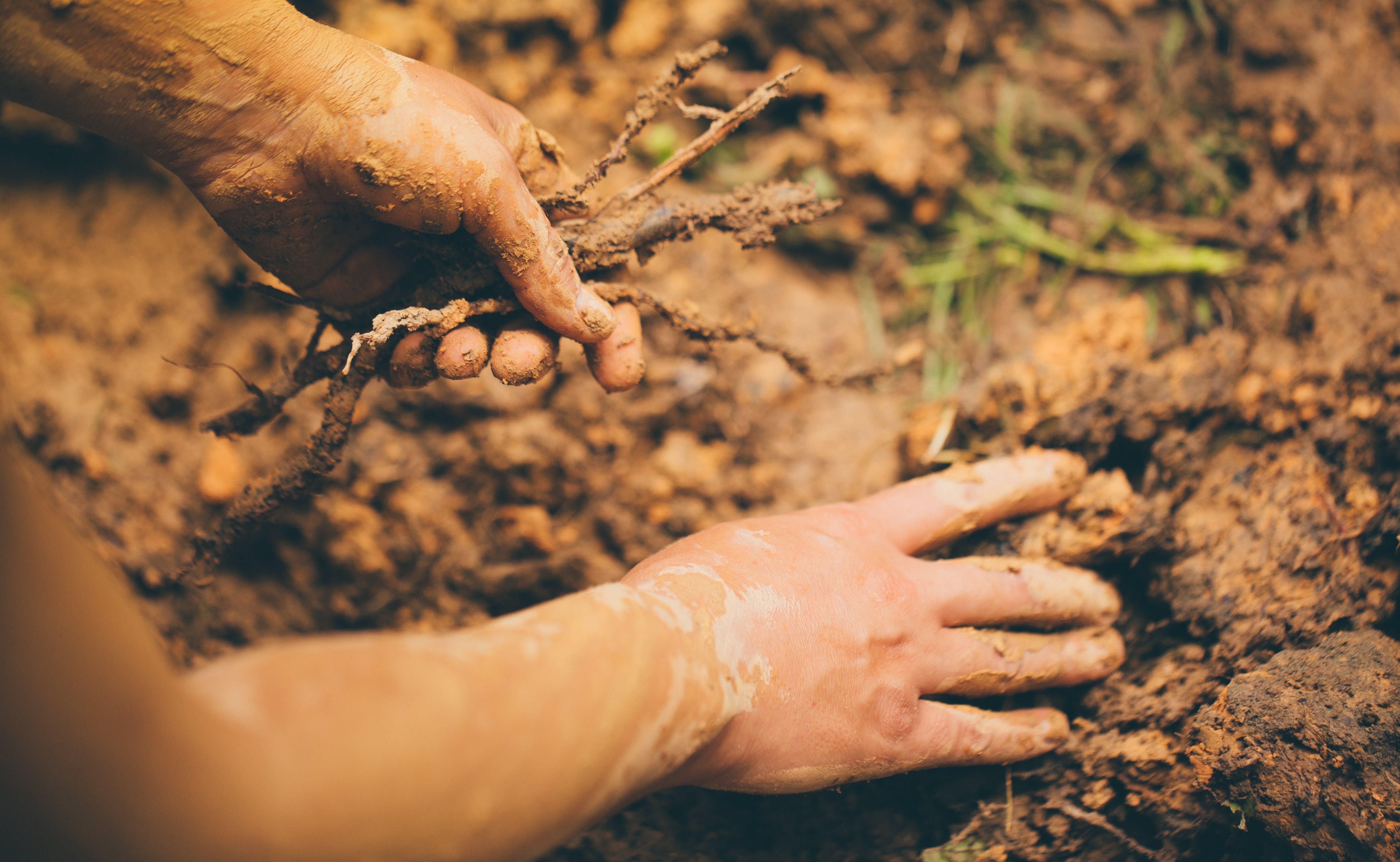 Person Holding Sticks Digging Mud Soil