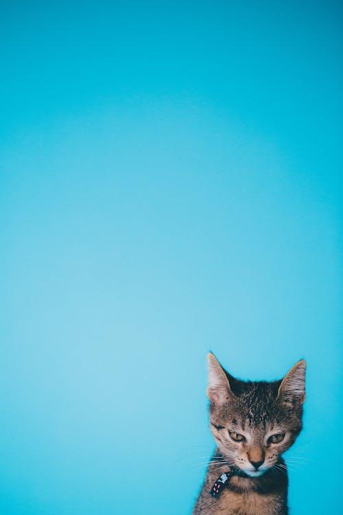 Fotos de stock gratuitas de animal, Arte, gato, joven