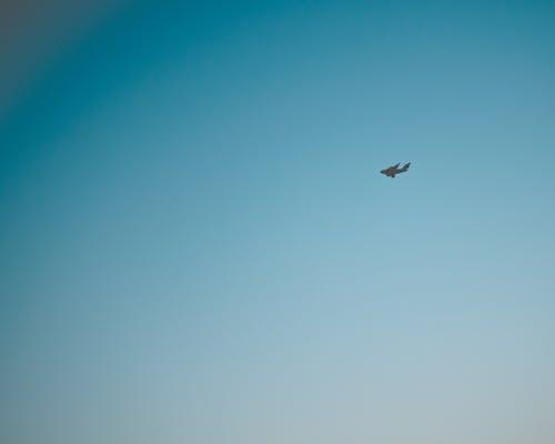 Fotobanka sbezplatnými fotkami na tému #let, jasná obloha, let, lietadlo