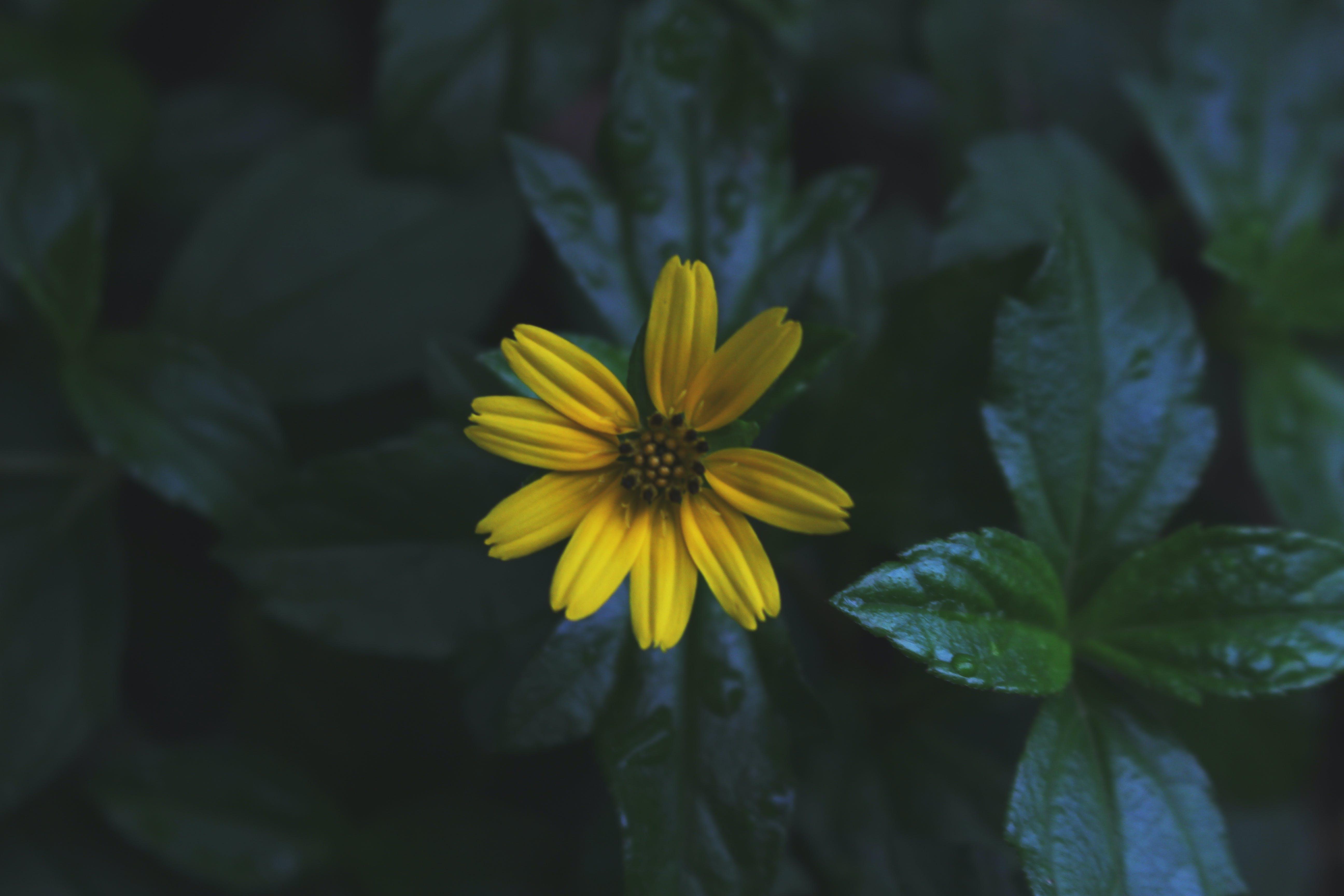 Yellow Daisy Flower