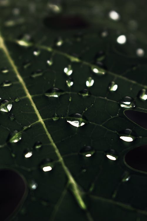 水, 濕, 特寫, 綠色 的 免費圖庫相片
