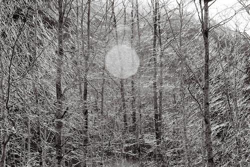 나무 둥치, 숲의 무료 스톡 사진