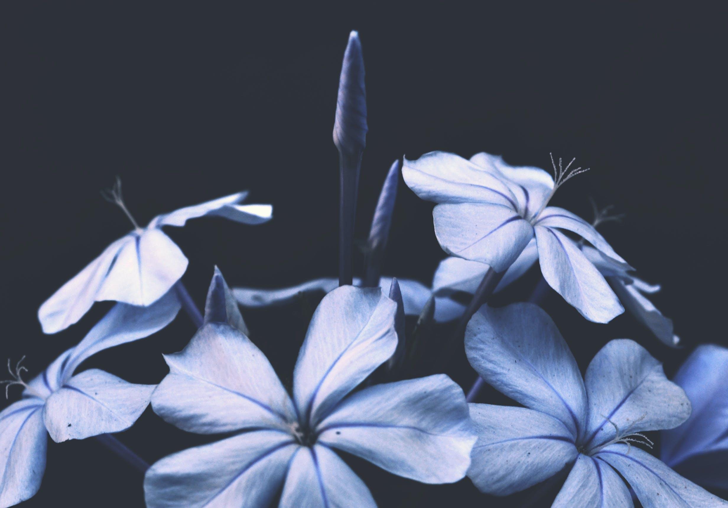 คลังภาพถ่ายฟรี ของ กลีบดอก, กำลังบาน, ดอกไม้, ตกแต่ง