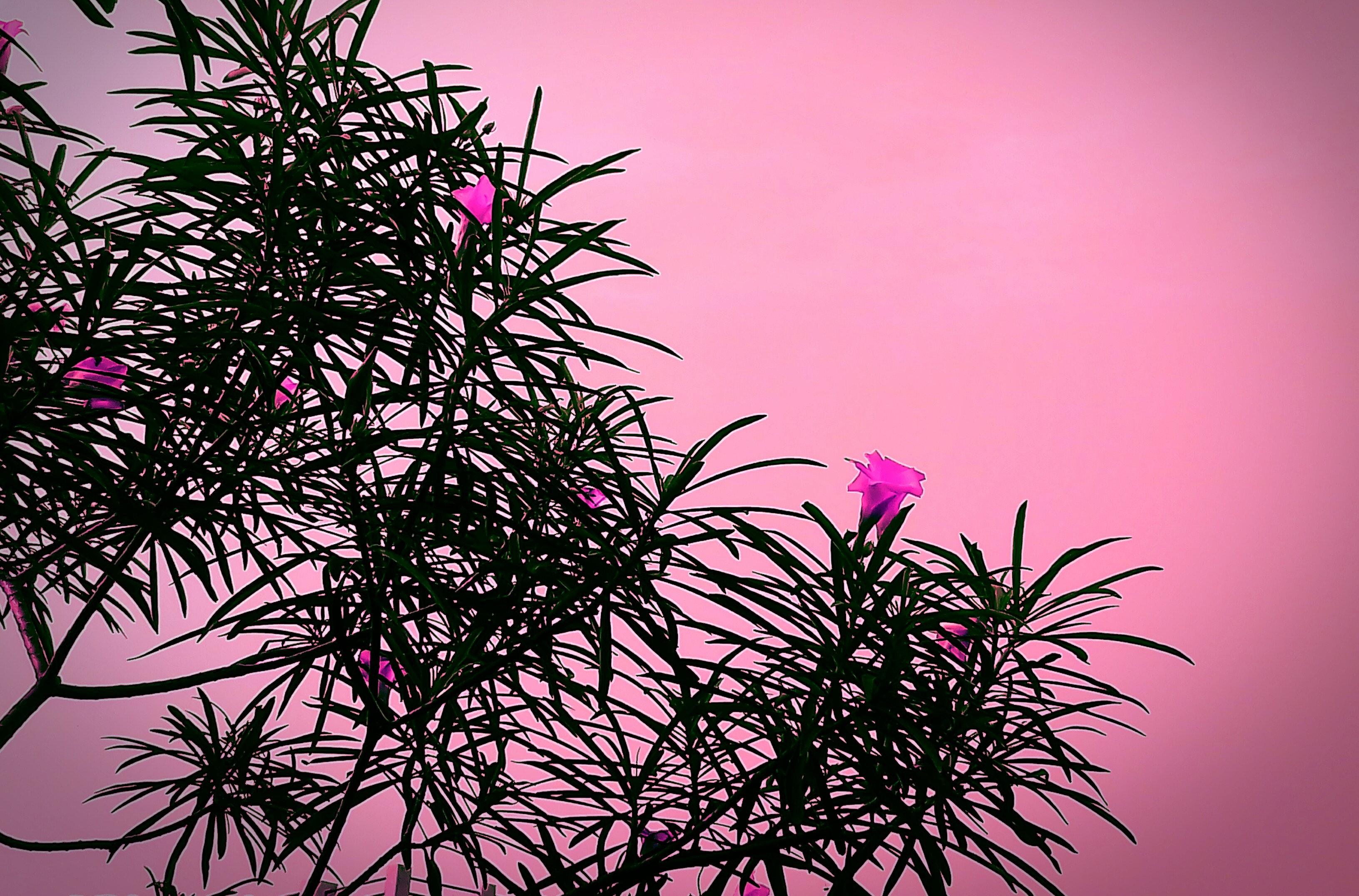 Free stock photo of blossom, desktop wallpaper, flora