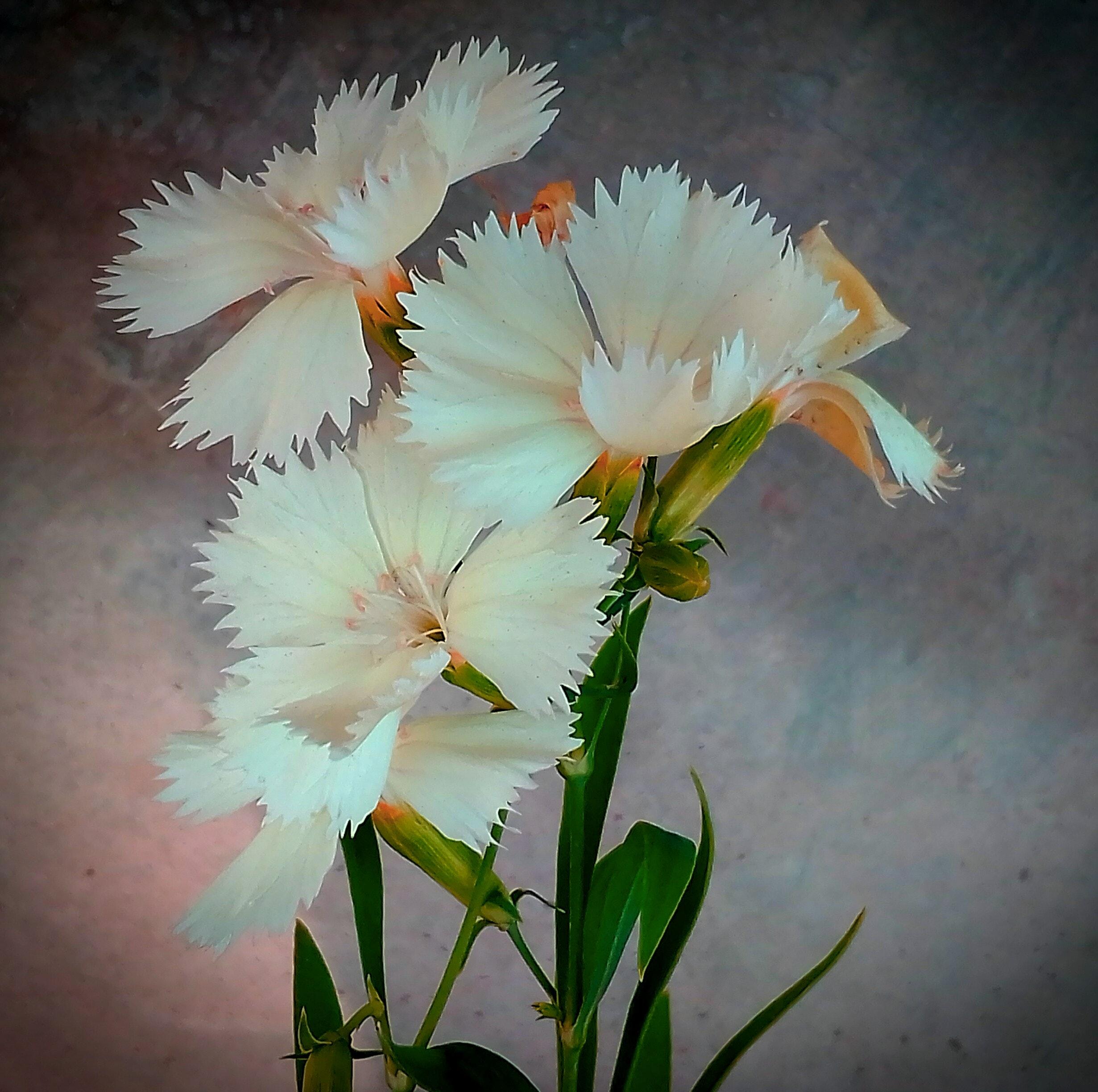 Free Stock Photo Of Beautiful Flowers Blossom Desktop Wallpaper