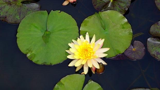 Free stock photo of nature, water, purple, yellow