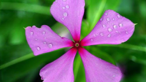 꽃이 피는, 꽃잎, 나뭇잎, 물의 무료 스톡 사진