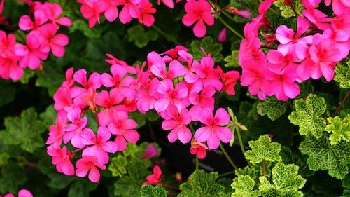Darmowe zdjęcie z galerii z botaniczny, flora, jasny, kolorowy