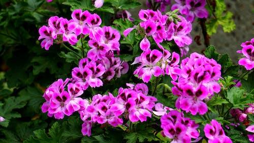 Darmowe zdjęcie z galerii z flora, kolorowy, kwiaty, kwitnąć
