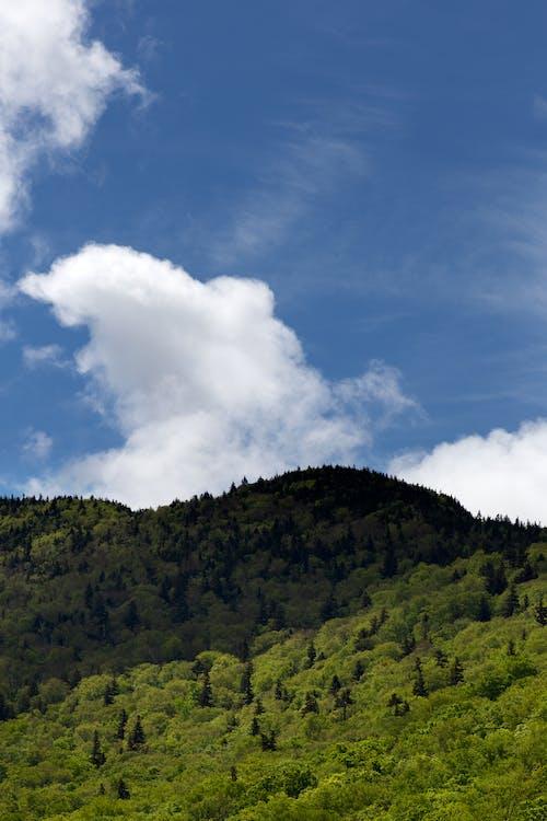 Ảnh lưu trữ miễn phí về ánh sáng ban ngày, cây, danh lam thắng cảnh, những đám mây