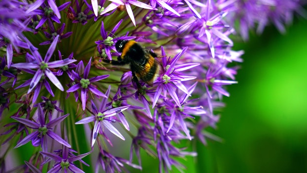 Free stock photo of nature, purple, garden, animal