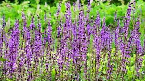 Purple Petaled Flowers Near Green Grass Bush