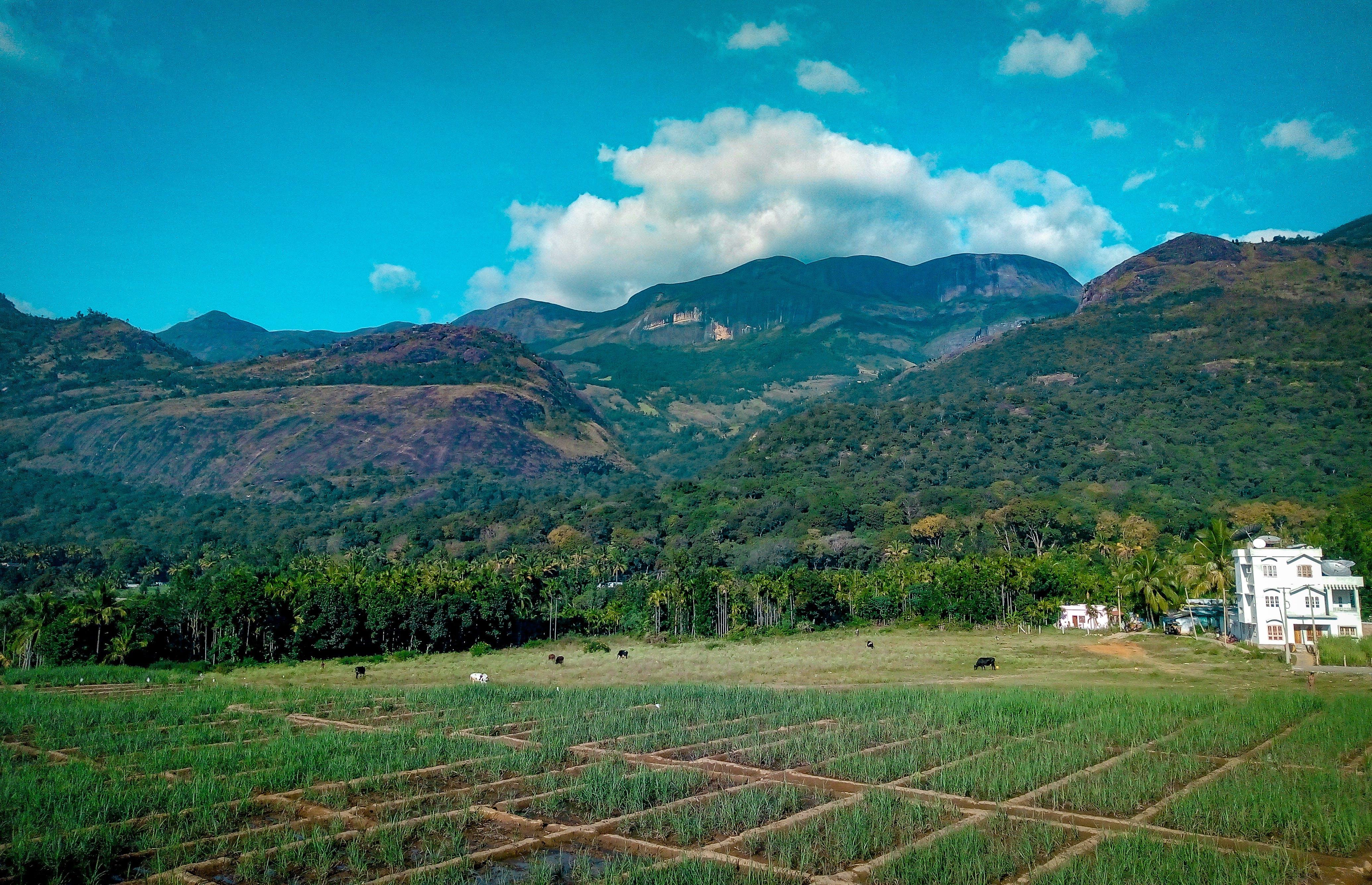 Rice Field Near Mountain at Daytime