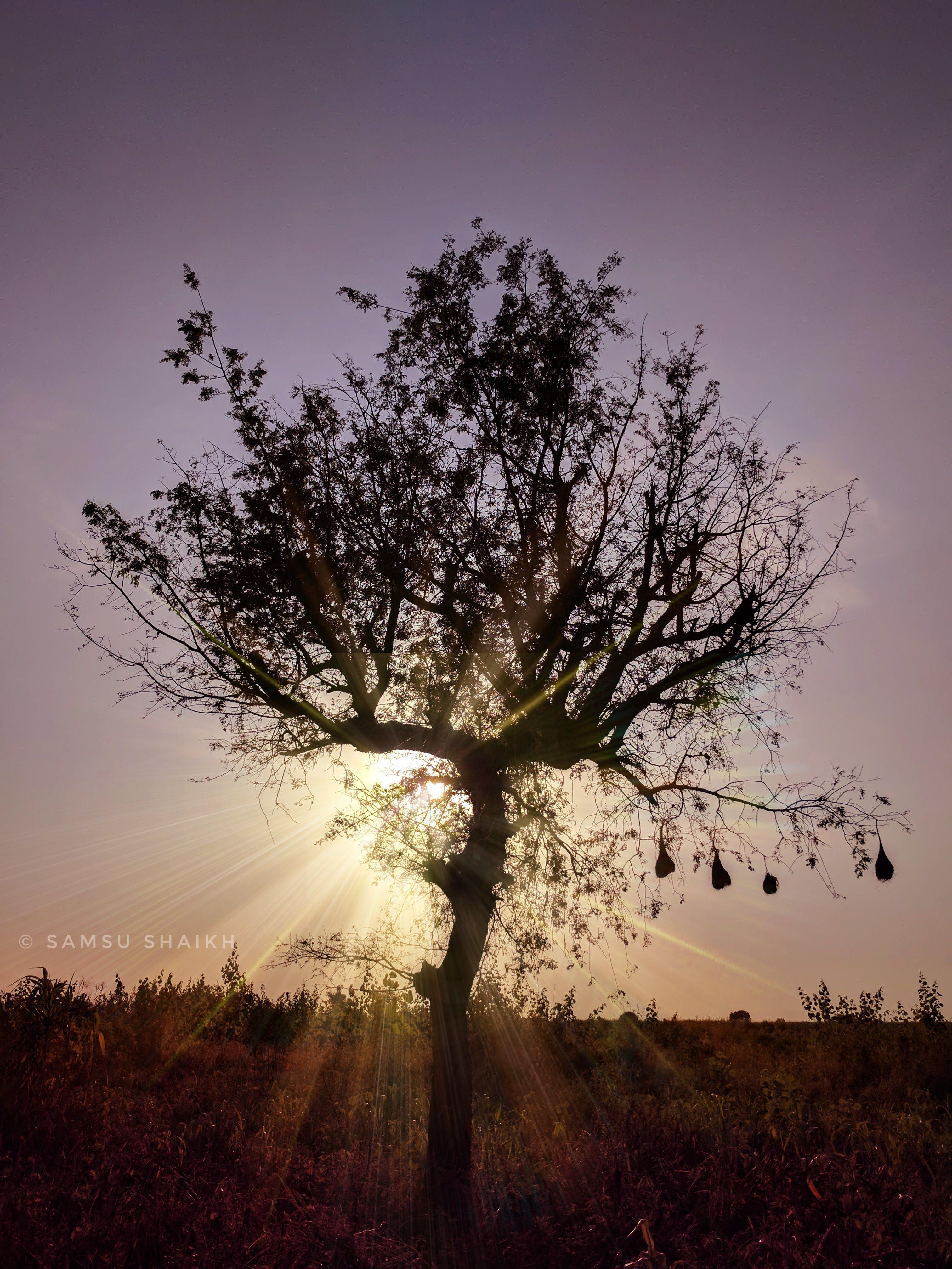 Free stock photo of #Tree, Adobe Photoshop, clear sky, farm