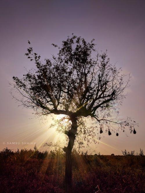 Foto d'estoc gratuïta de #tree, Adobe Photoshop, cel clar, granja