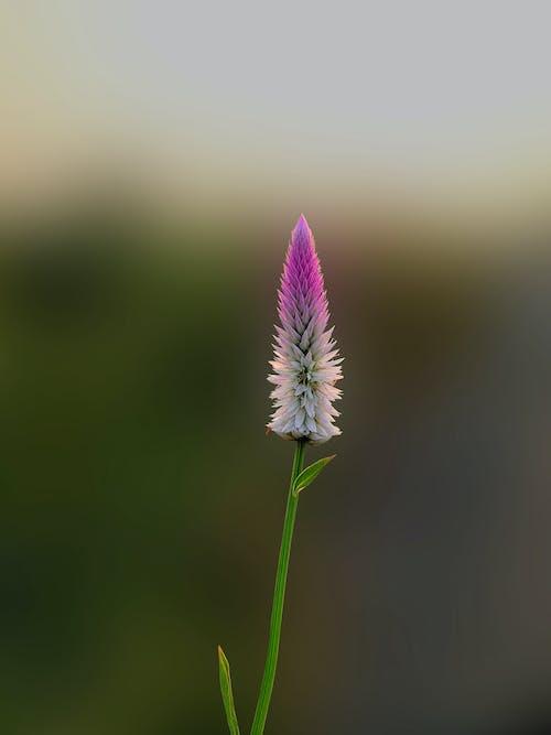 Foto d'estoc gratuïta de colors, creixement, flor, flora