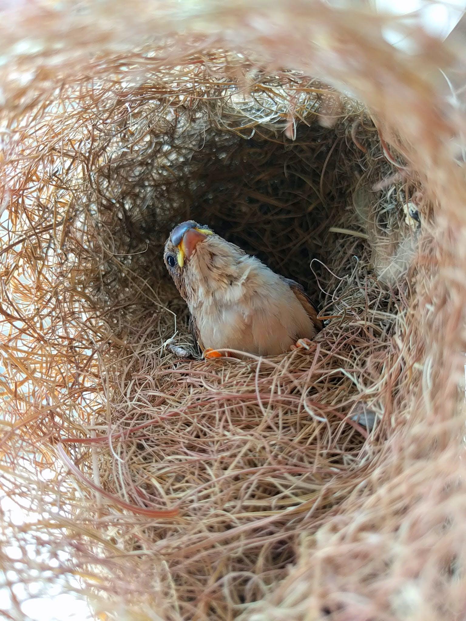 Free stock photo of bird, bird nest, sparrow