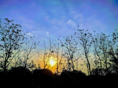 Foto d'estoc gratuïta de #tree, Bon dia, cel blau, dinàmic