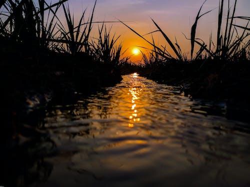 Foto d'estoc gratuïta de aigua, amb silueta, capvespre, cel