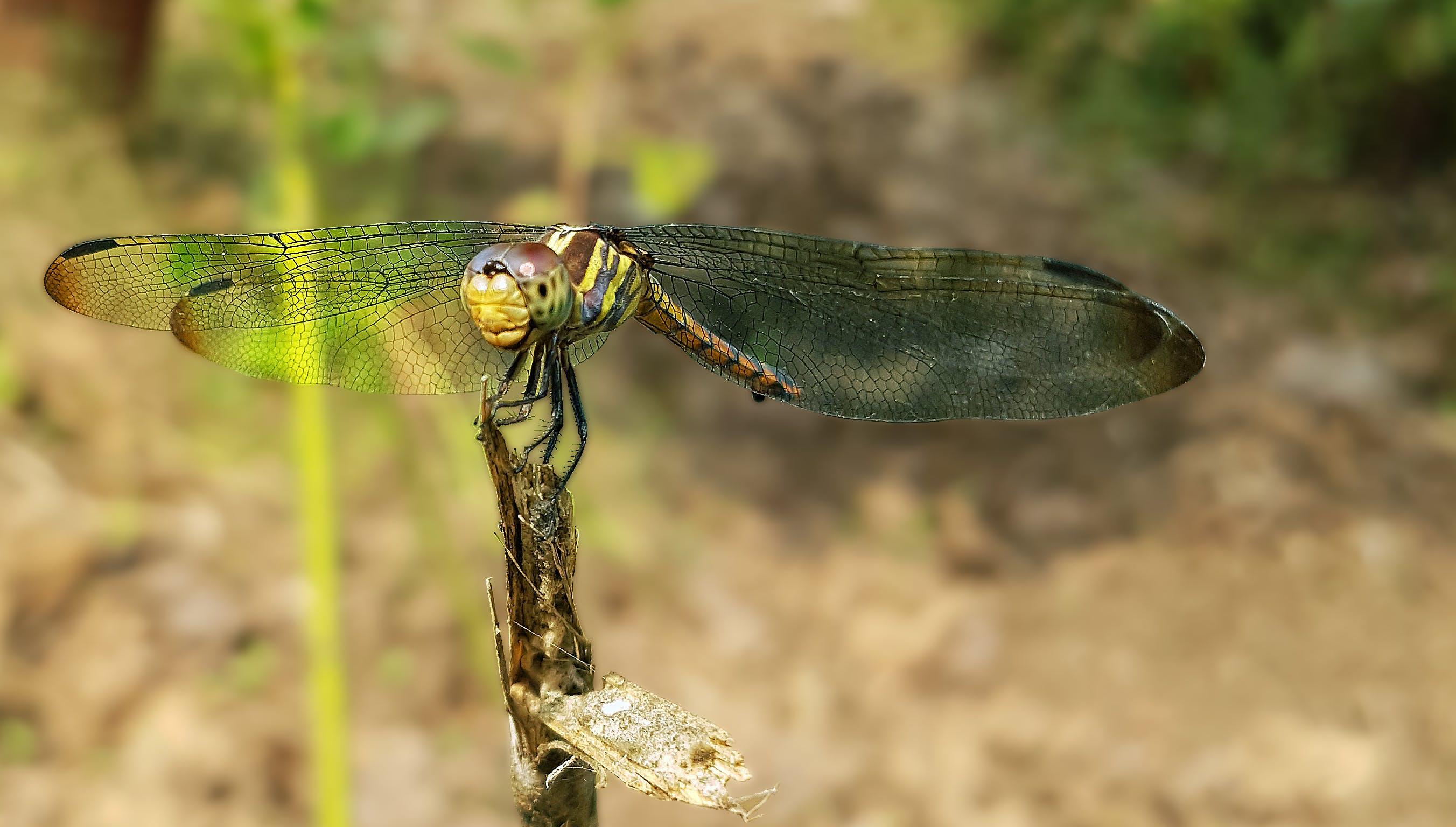 Kostenloses Stock Foto zu draußen, entomologie, farben, flügel