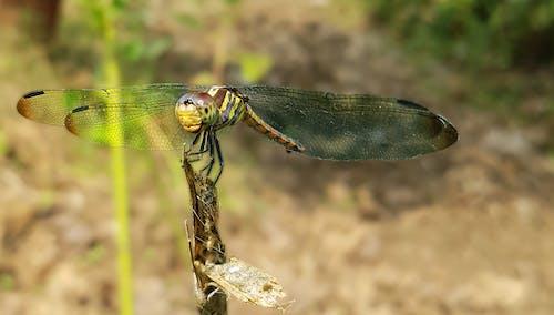 Foto d'estoc gratuïta de ales, animal, colors, entomologia