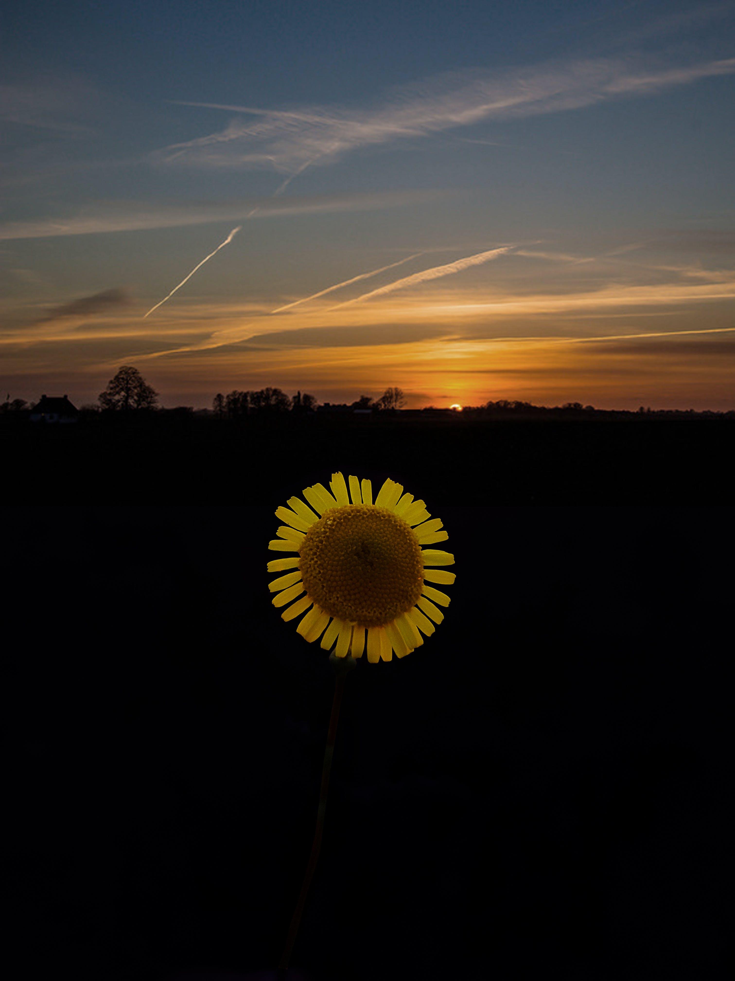 Free stock photo of Adobe Photoshop, beautiful flowers, dark, dawn