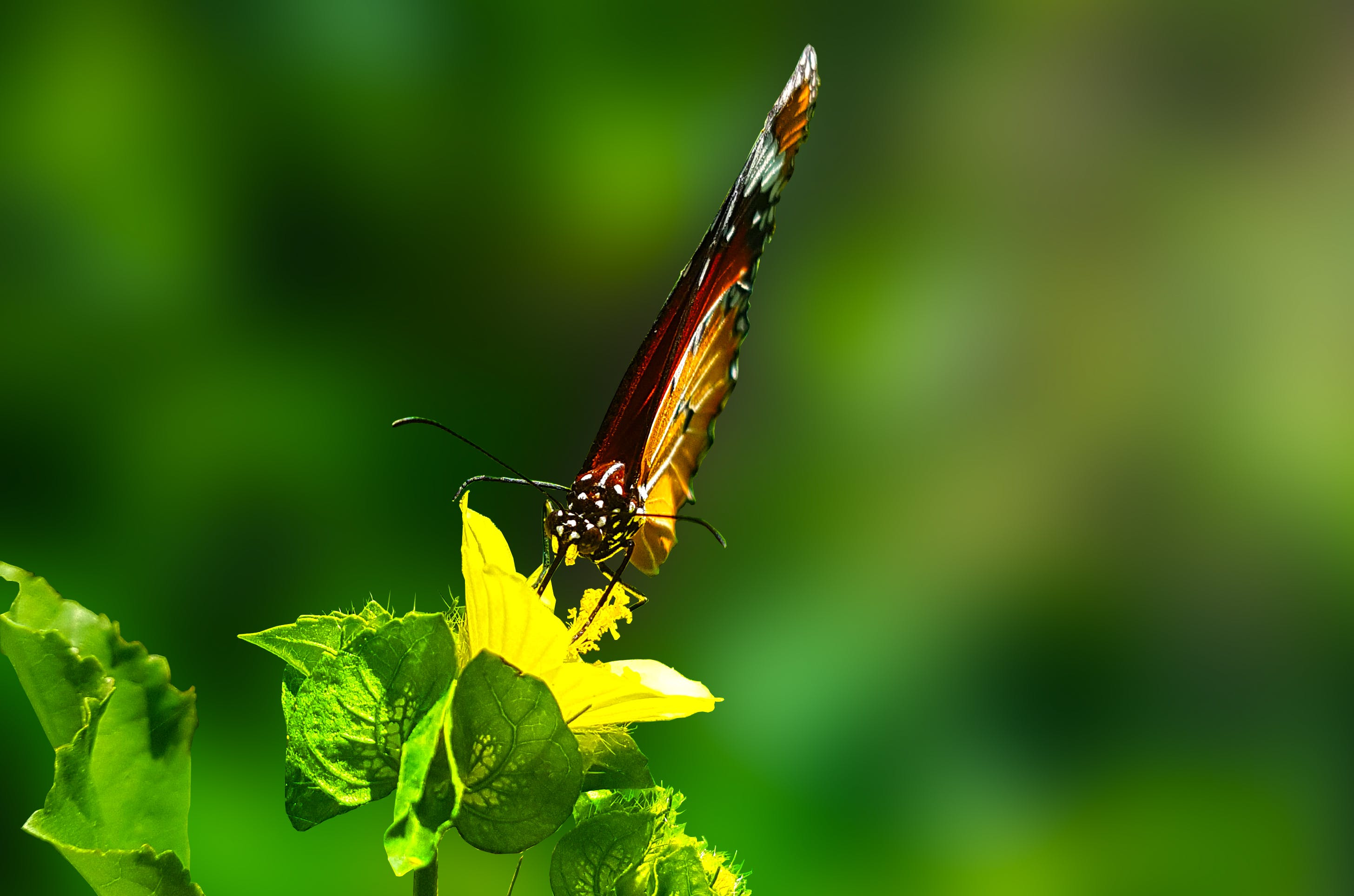 Brown Butterfly Perched on Green Leaf Plant in Closeup Photography
