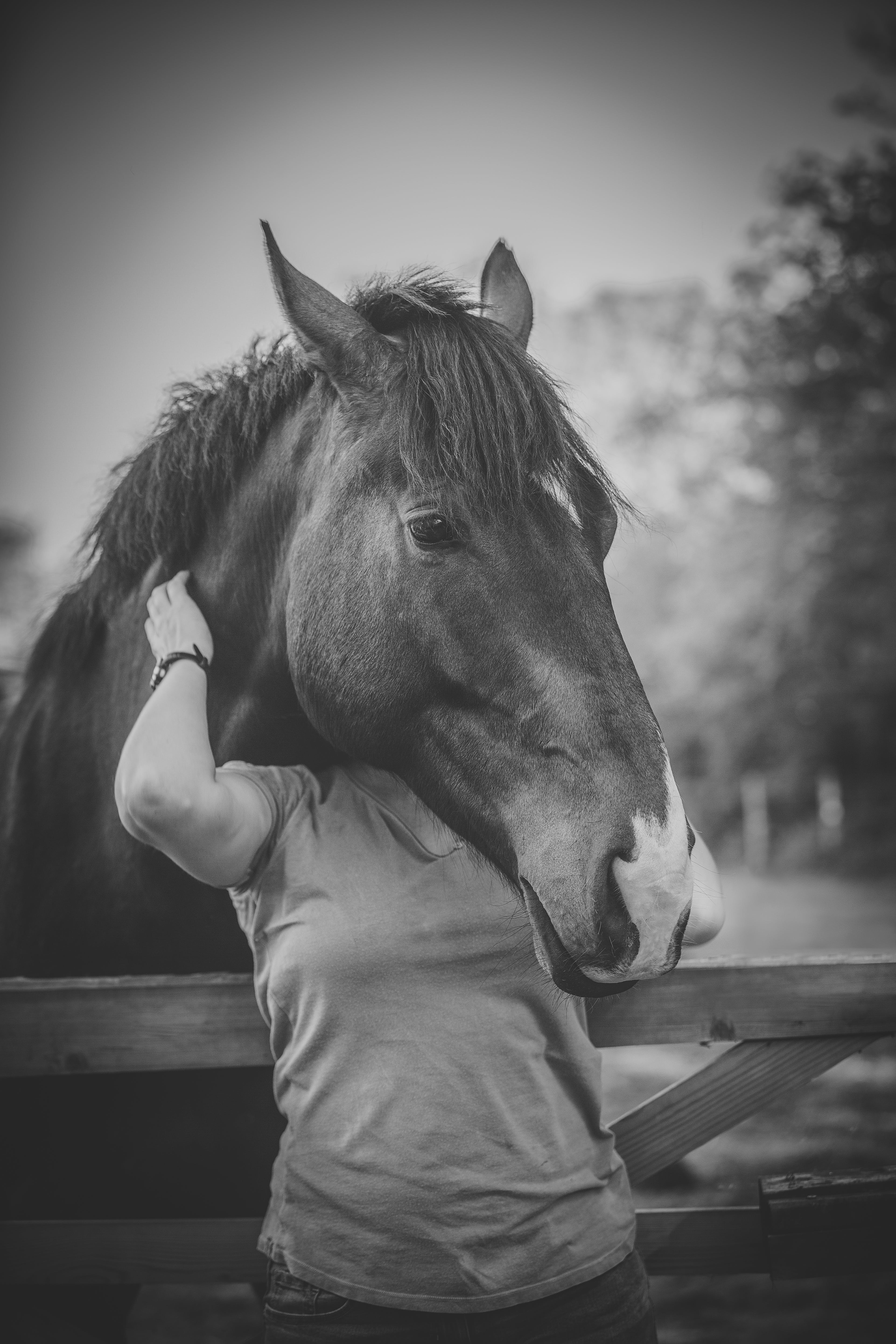 Grayscale Photo of Person Hugging on Horse