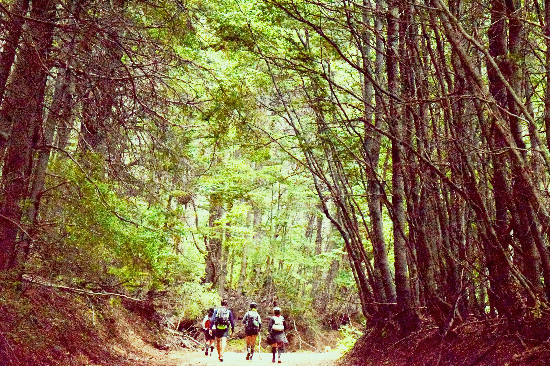 Foto d'estoc gratuïta de arbres, boscos, carretera, creixement