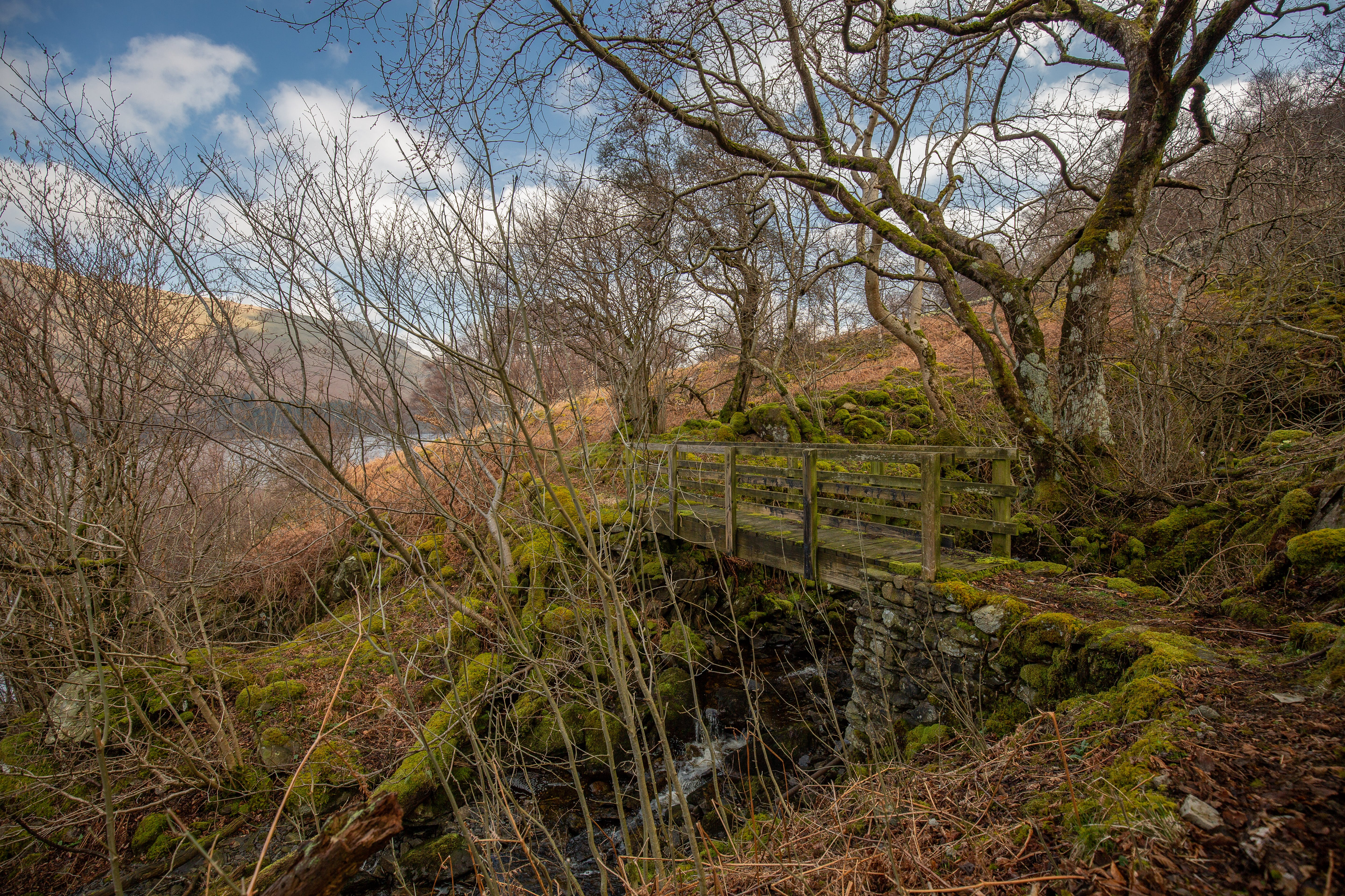 Concrete Bridge in the Middle of the Forest Surround by Brown Bare Trees