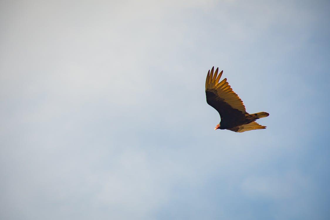 Black and Yellow Bird Flying