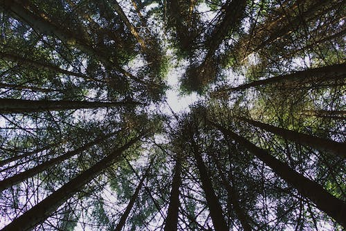 Free stock photo of blue sky, forest, nature