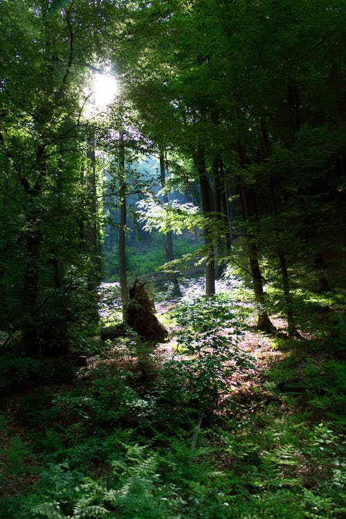 Free stock photo of #forest, blue sky, early morning, forest