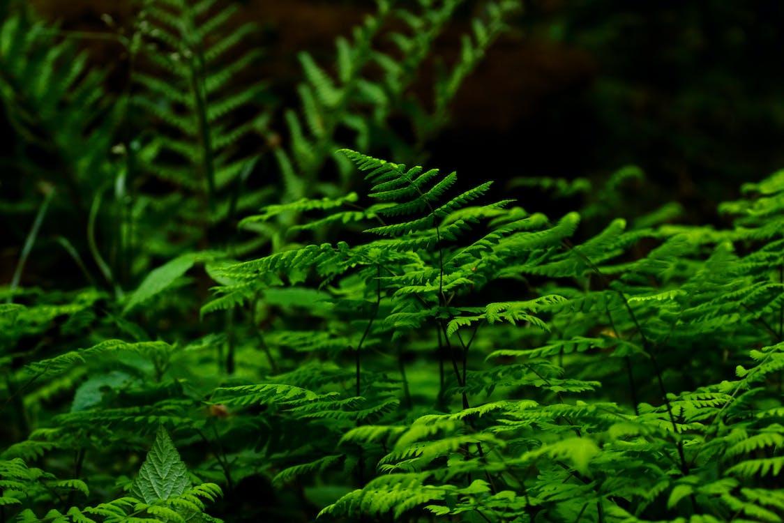 környezet, közelkép, növekedés