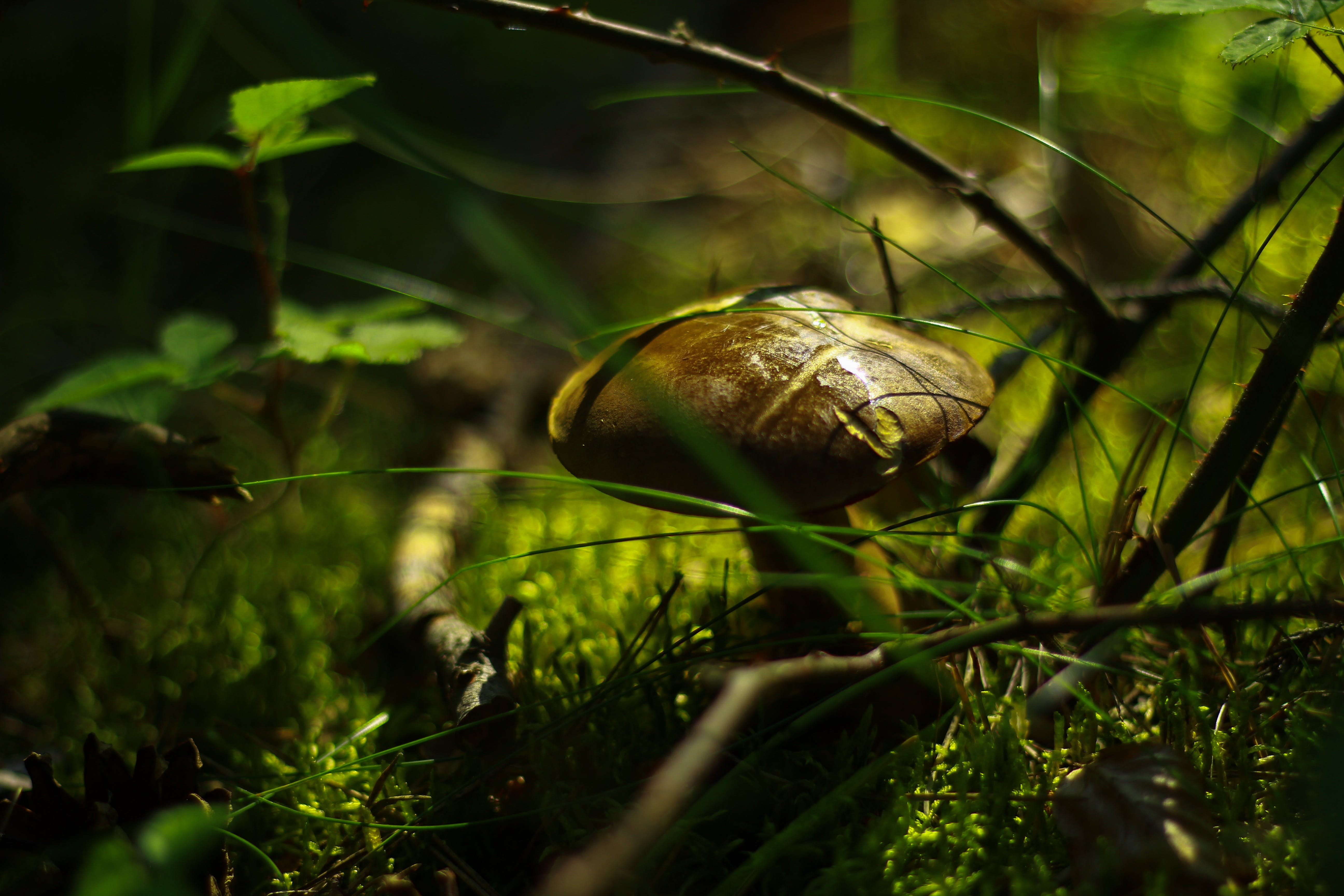 Shallow Focus Photography of Brown Mushroom