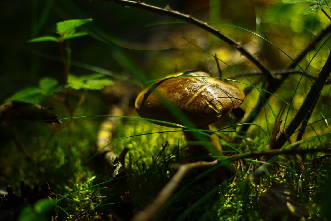 Shallow Focus Photography of Brown Mushroom