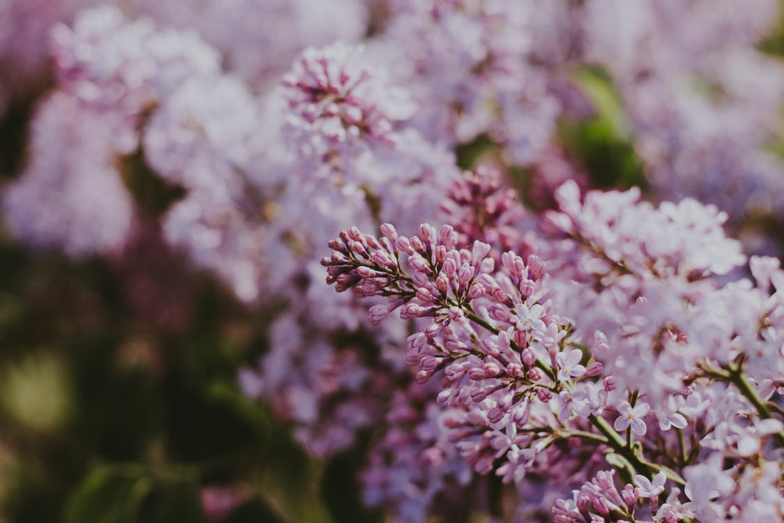 al aire libre, botánico, brillante