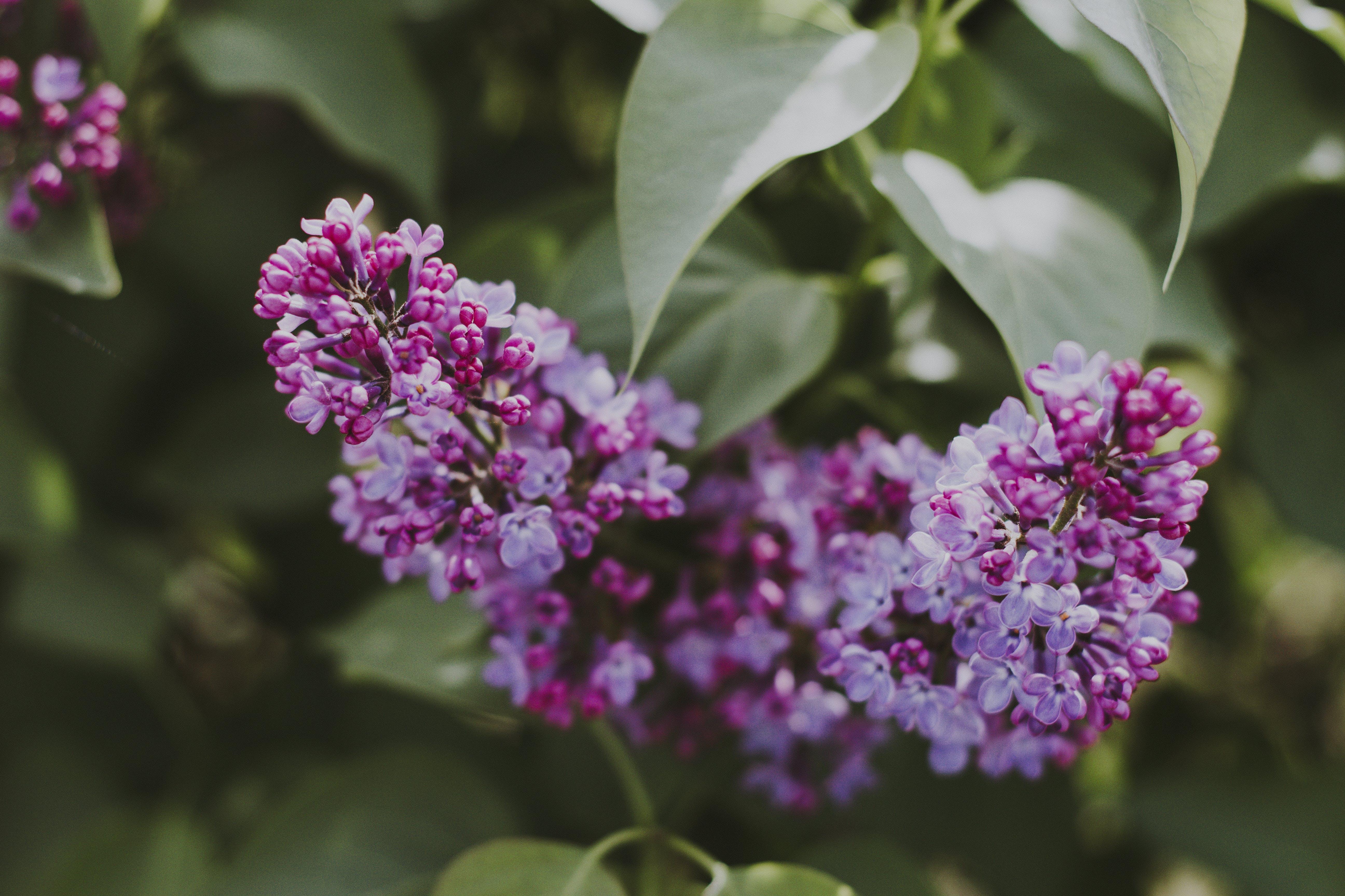 Základová fotografie zdarma na téma barvy, flóra, jasný, květiny