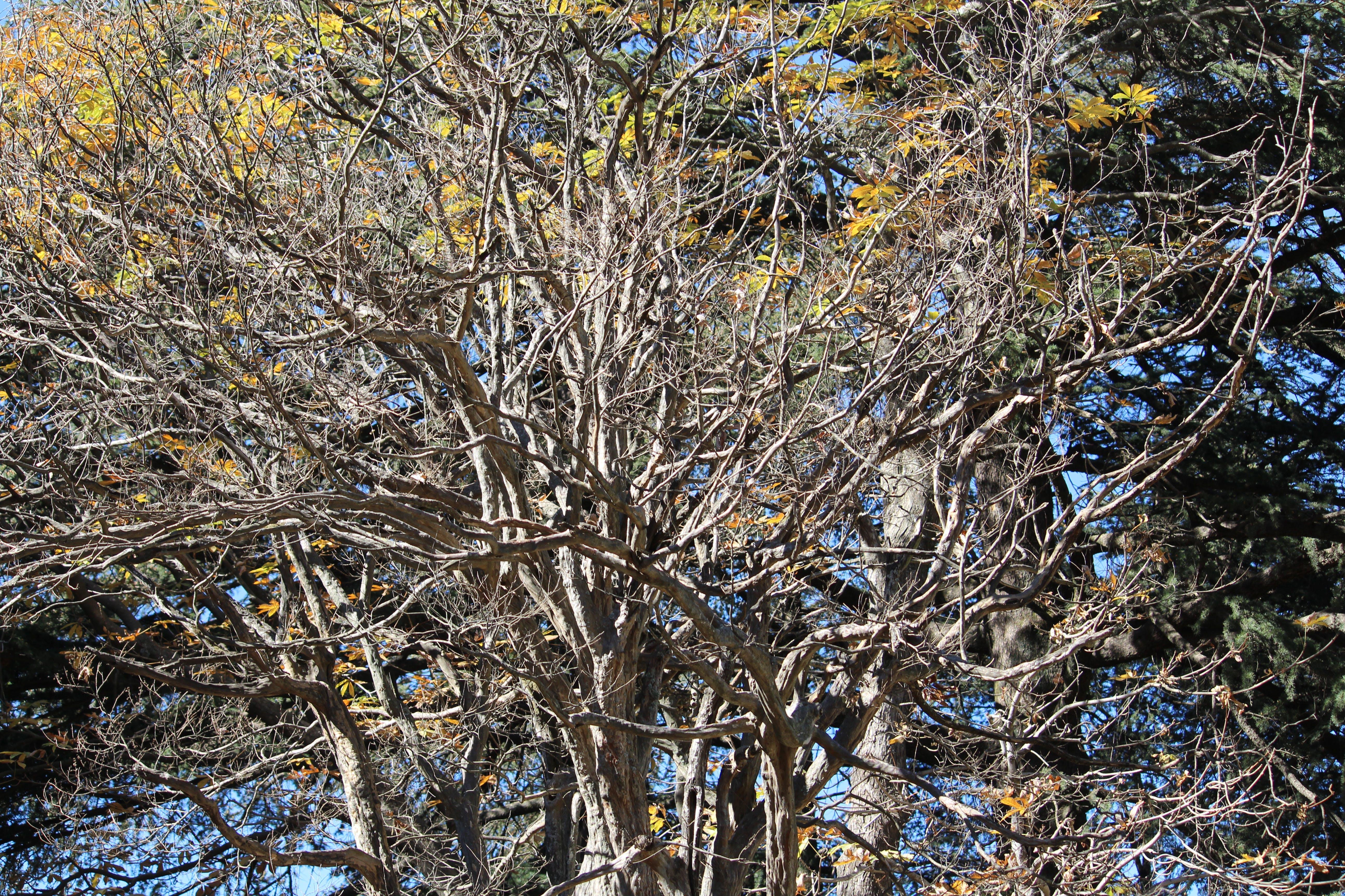 Free stock photo of dry, dry tree, tree