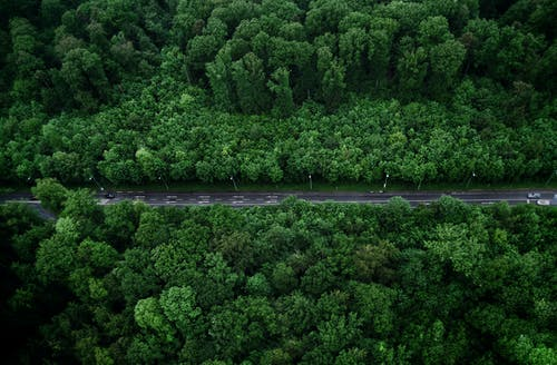Bird's-eye View Photo of Road With Trees