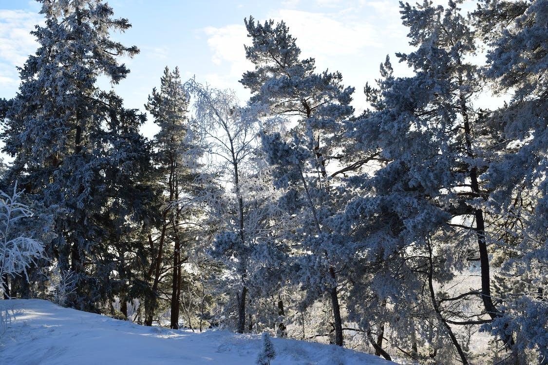 bäume, einfrieren, eis