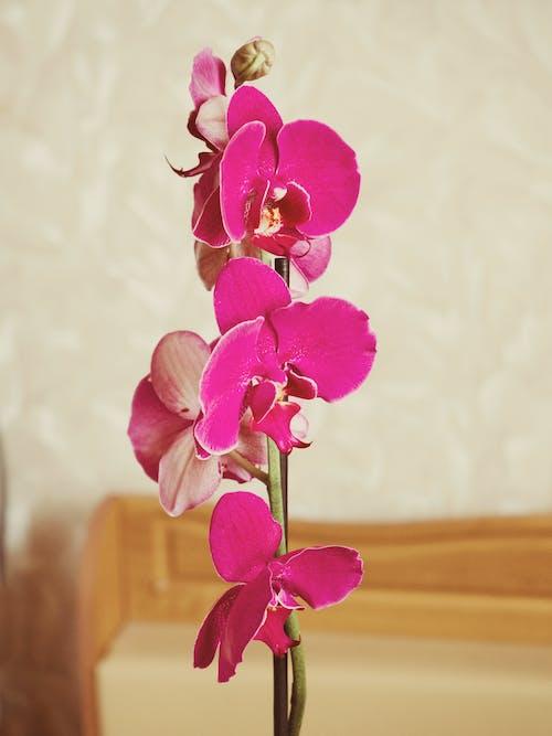 Fotos de stock gratuitas de belleza, bonito, color, flor