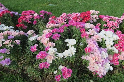 Бесплатное стоковое фото с красивые цветы, цветы