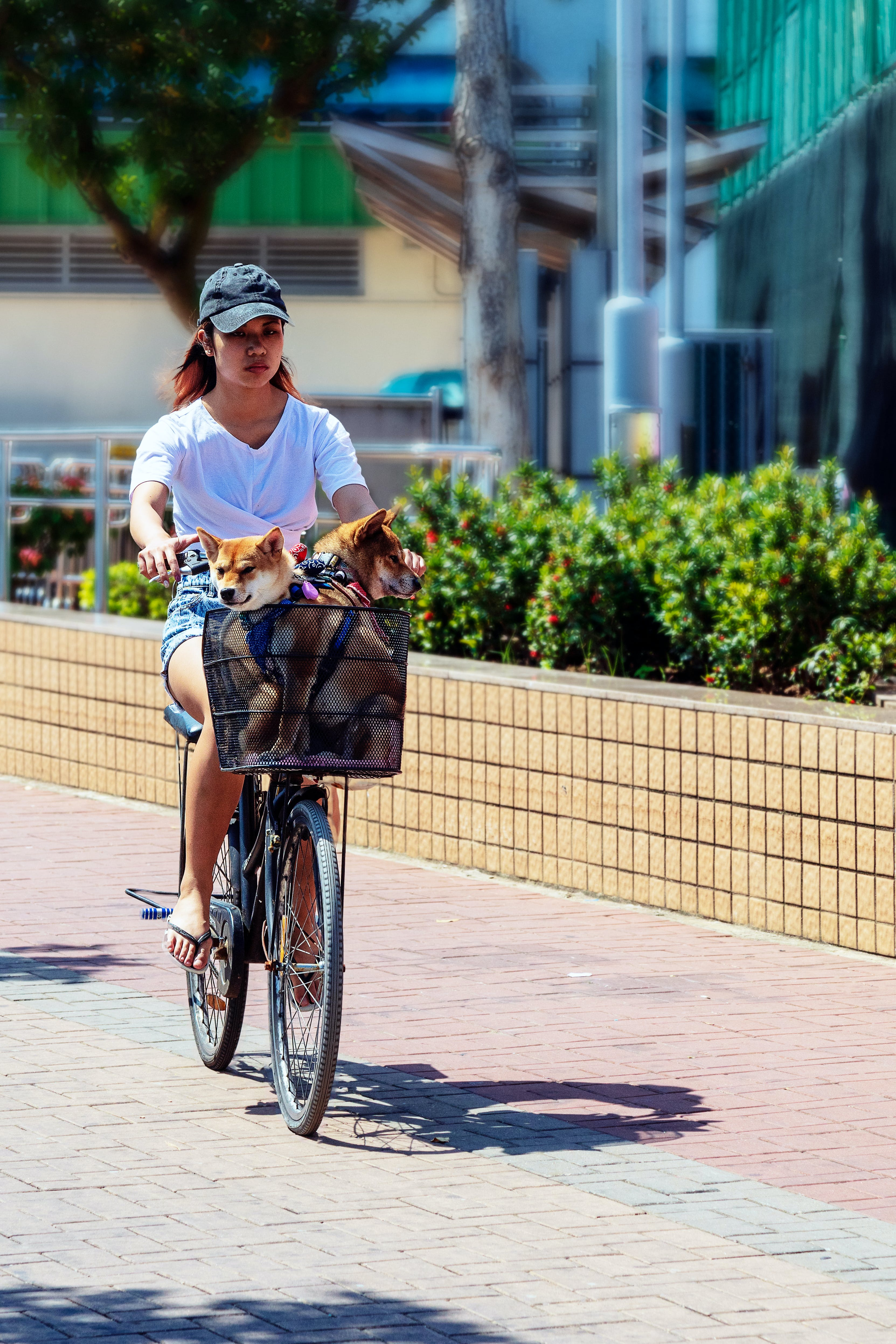 Woman Riding Bicycle With Dog in Basket