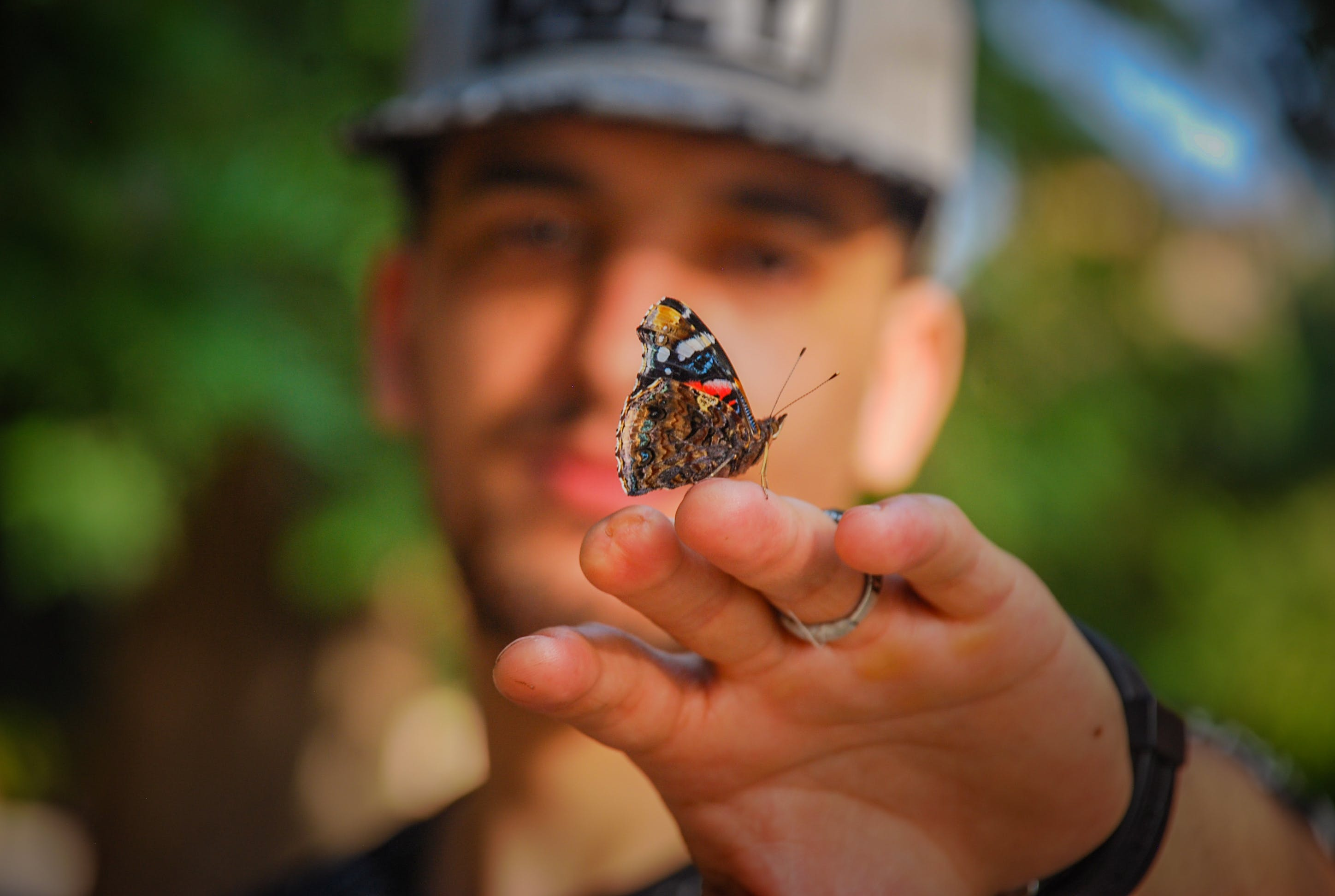 Brown and Black Butterfly on Man's Hand