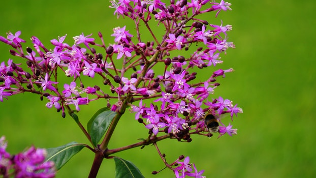 Free stock photo of nature, flowers, garden, grass