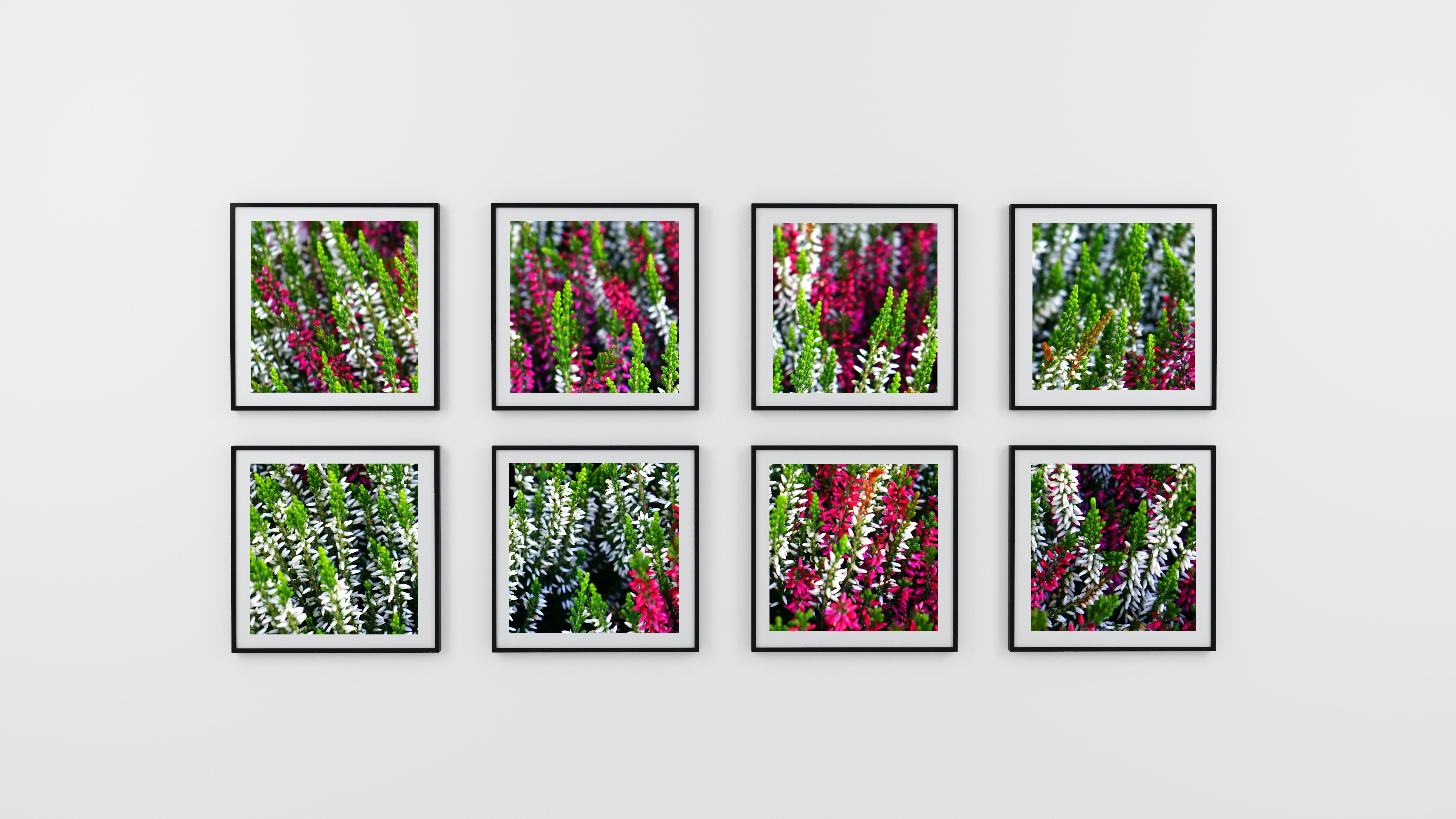 Kostenloses Stock Foto zu abbildung, ausstellungsstück, bilderrahmen, blumen