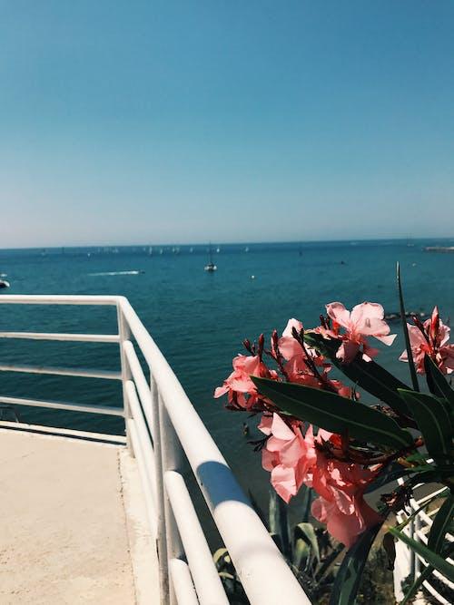 Ảnh lưu trữ miễn phí về biển Địa Trung Hải, hoa, nắng