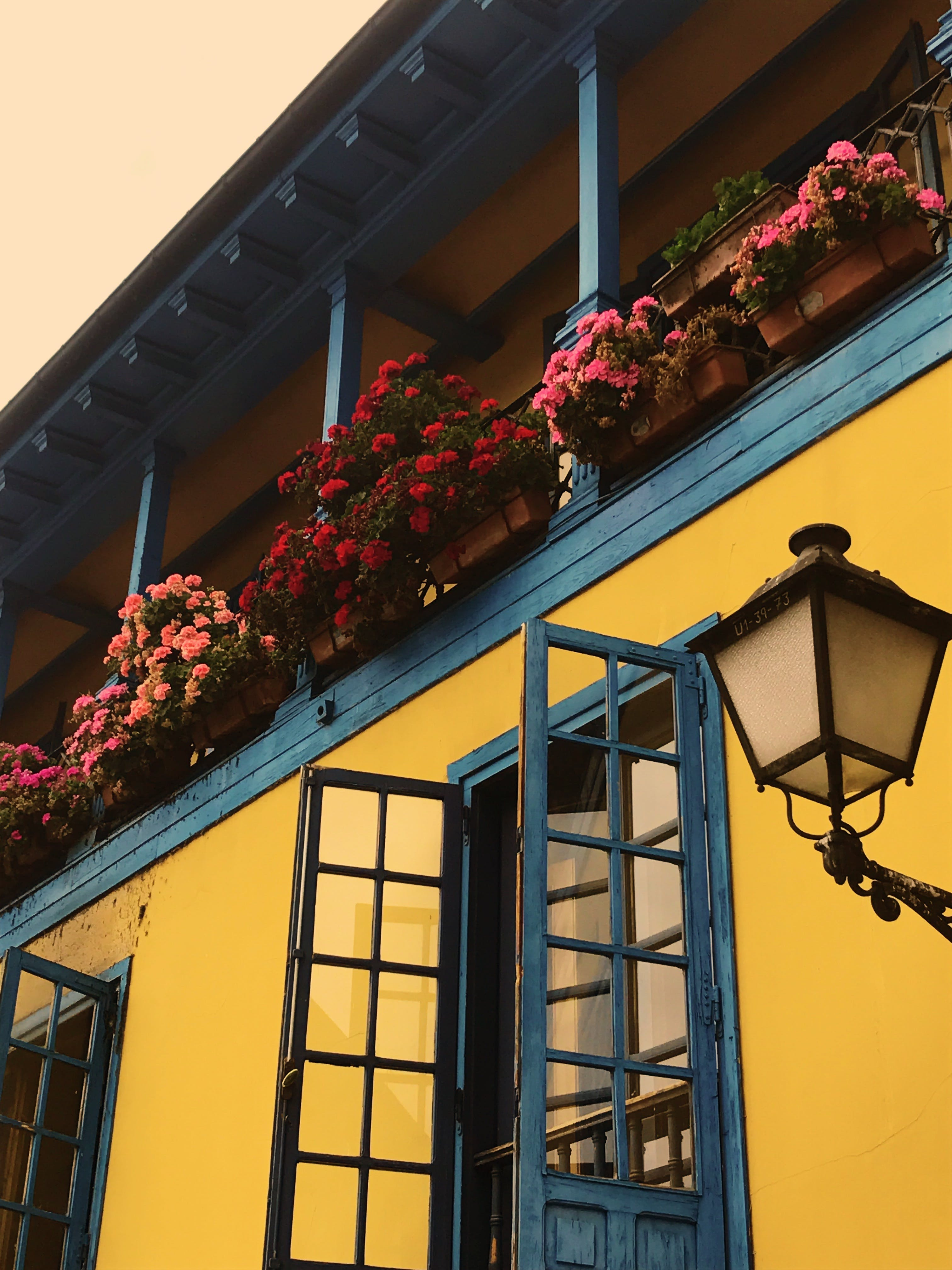 Balcony With Pink and Red Petaled Flowers